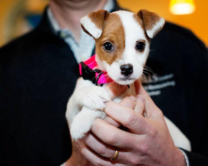 Ridley puppy